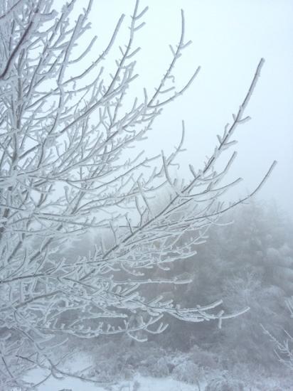 Raffy arbre gele ski yourte chapuze
